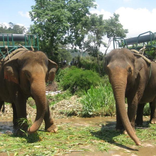 Далат Премиум и Водопад Понгур 3