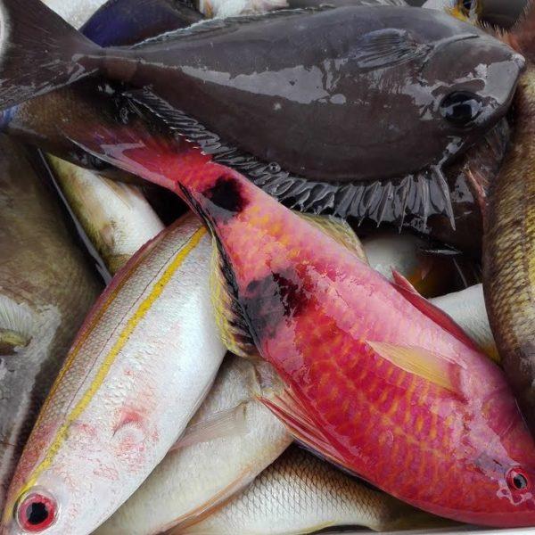 Морская рыбалка Нячанг