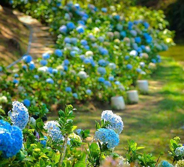 Цветы Далат